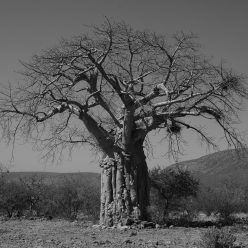 Baobab Verein n.e.V.